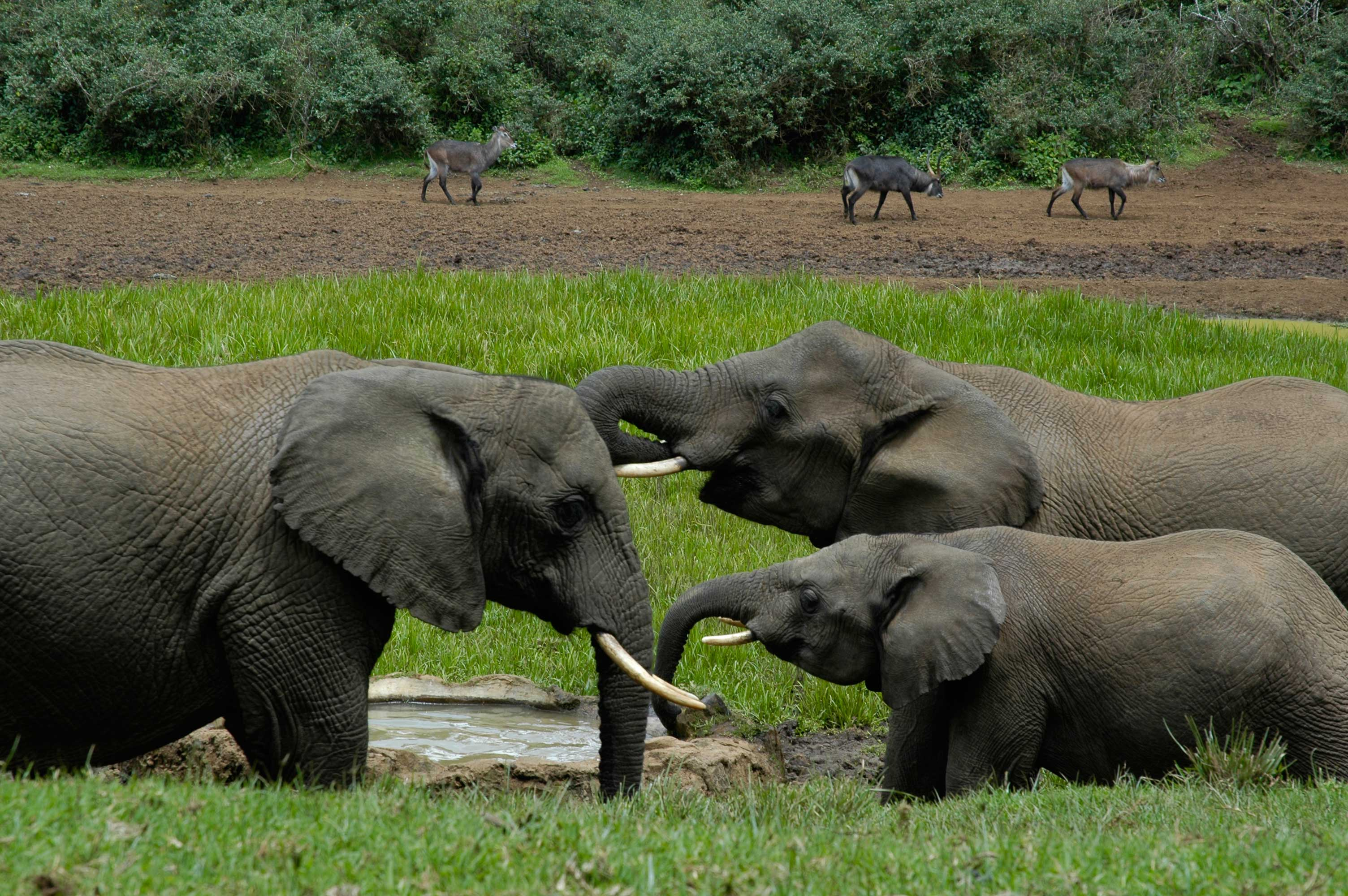 African mountain animals - Also Available Are Mountain Expeditions Using Mules As Pack Animals Organised By Mountain Safaris Firms And Alpine Huts For Mountaineers Booked Through The