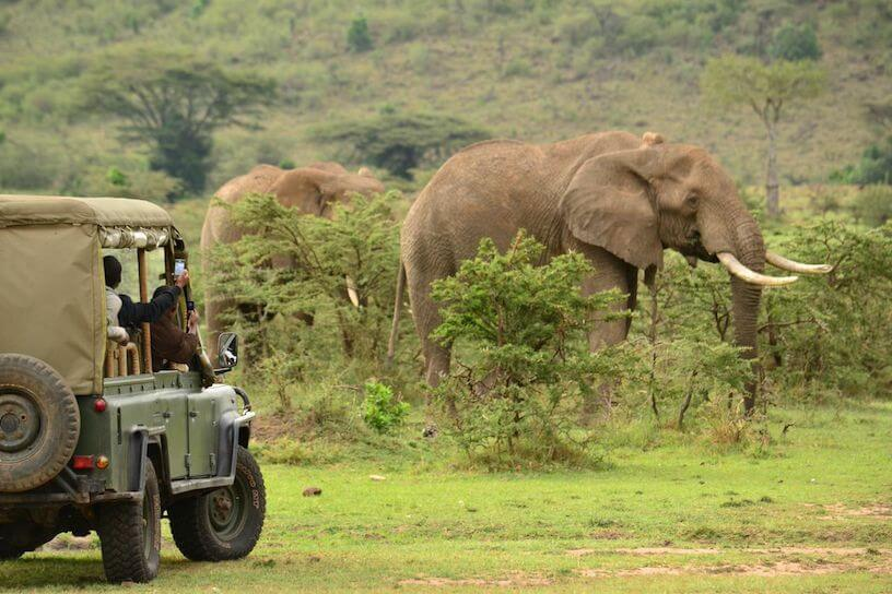 Spotting elephant from a safari vehicle on a game drive