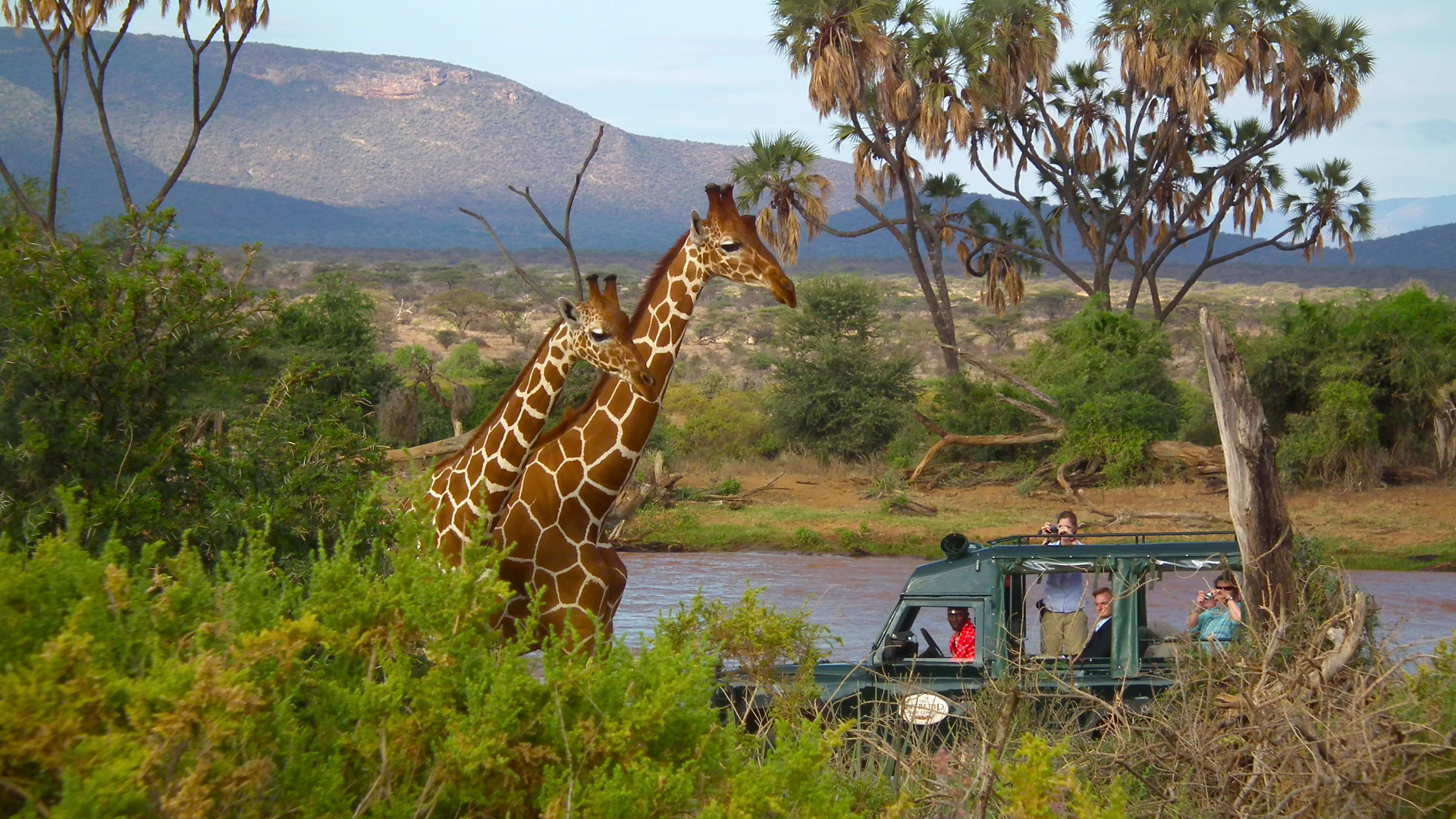 Shaba Game Reserve Safari